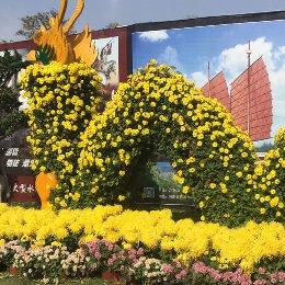 菊花造型龙