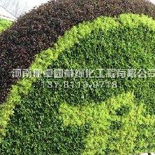 吉林集安五色草造型