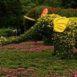 菊花造型大象
